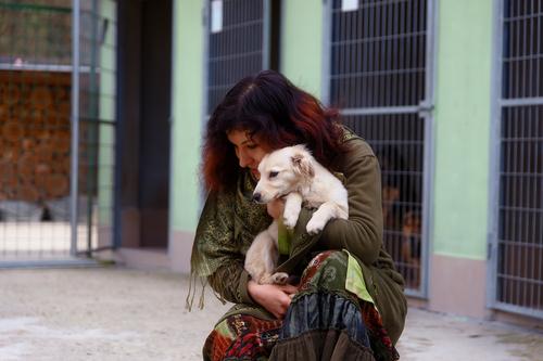 Animal Shelter